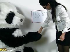 panda bear likes his teacher