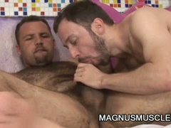 Hairy studs suck and fuck each other